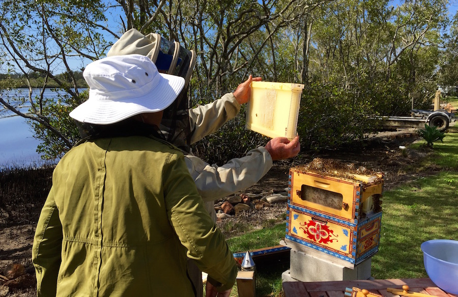 inspecting flow hive frames