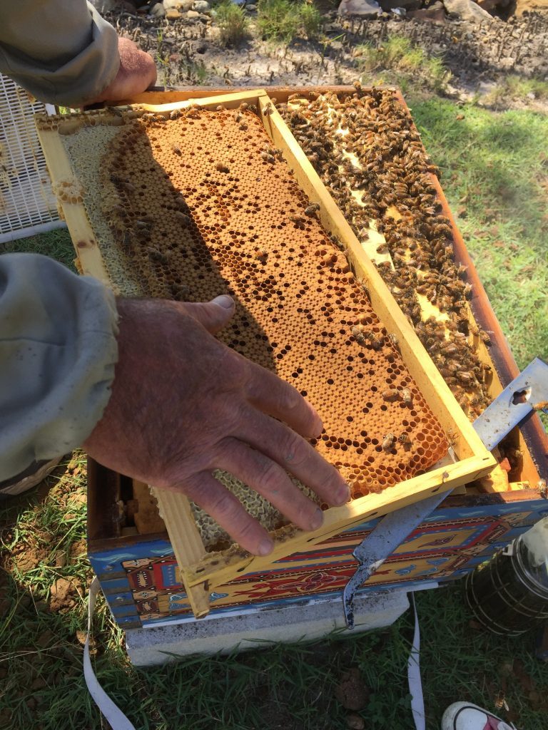 beehive spring management
