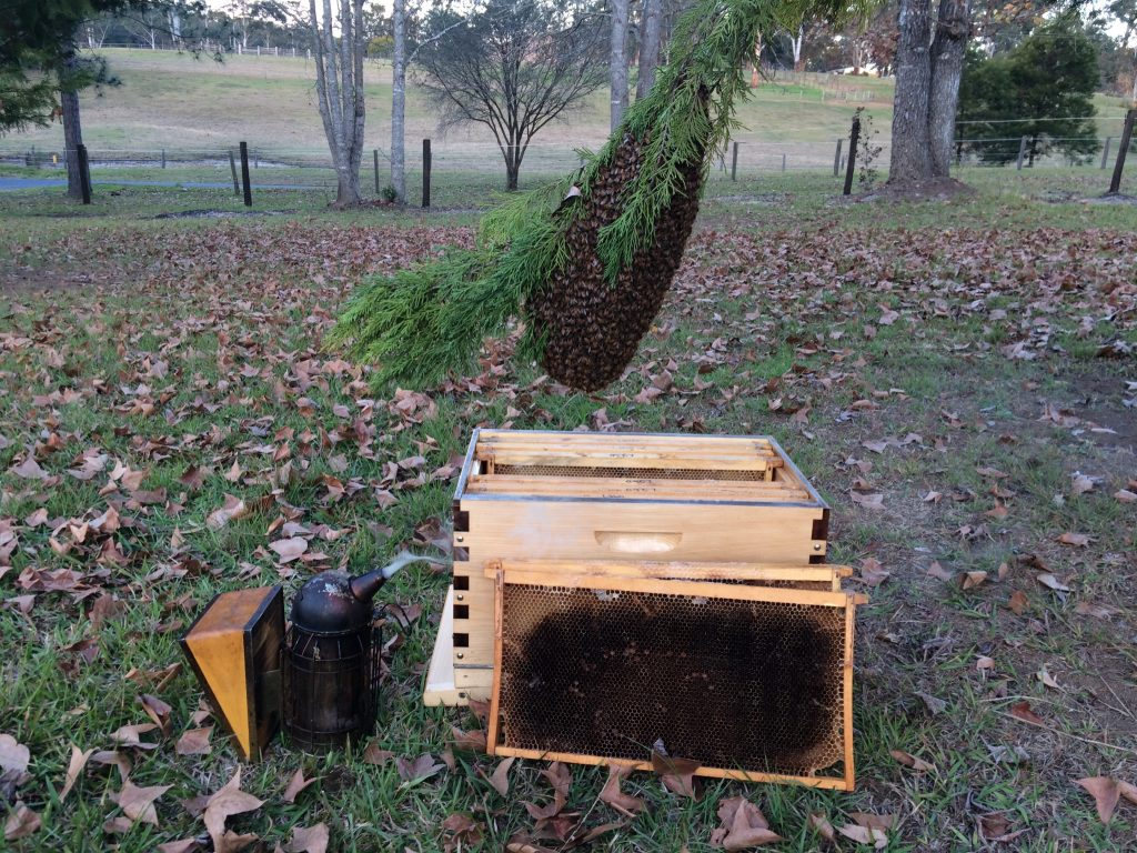 Backyard Beekeeping 101 For Urban Aussie Beekeepers Wiring Board Bee Frames A Swarm Of Bees