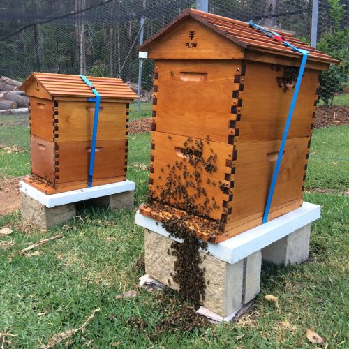 Responsible Backyard Beekeeping