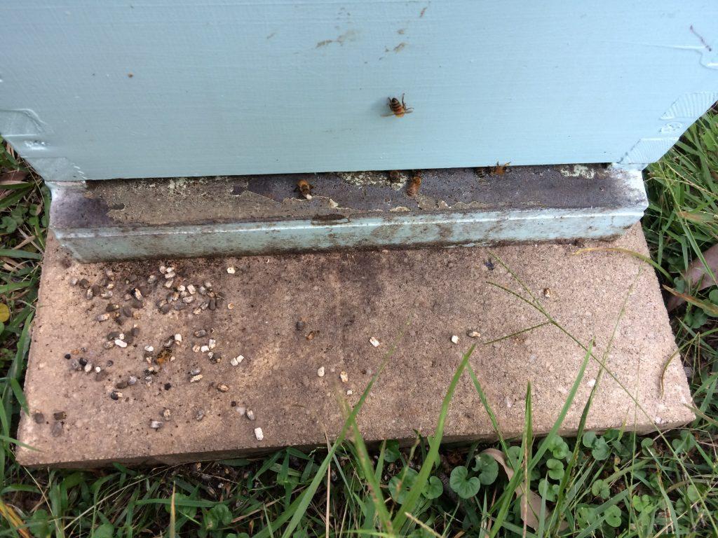 chalk brood disease of honeybees