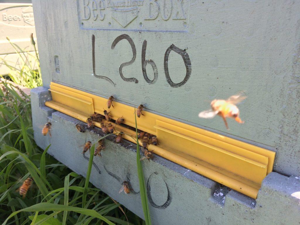 beehive registration number