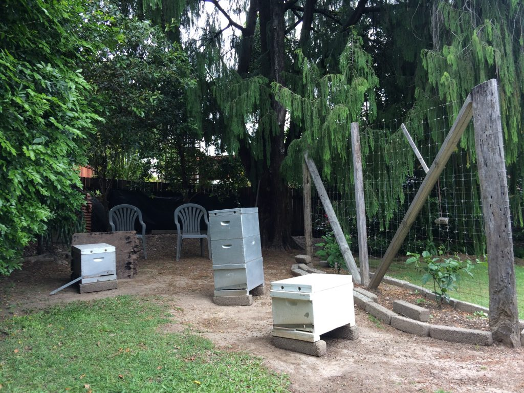 Well Located Backyard Beehives