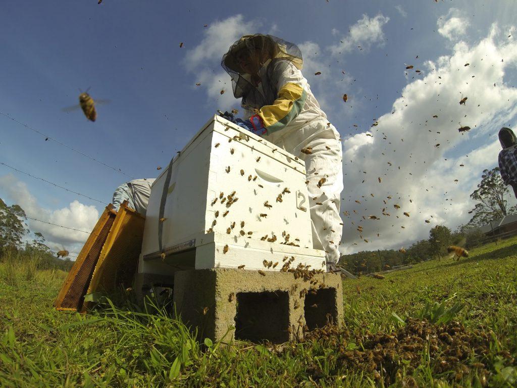 S Backyard Beekeeping Safe