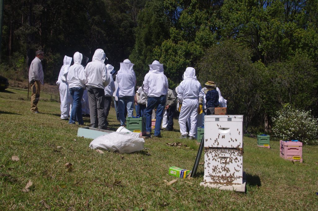 Advanced beekeeping classes for beekeepers