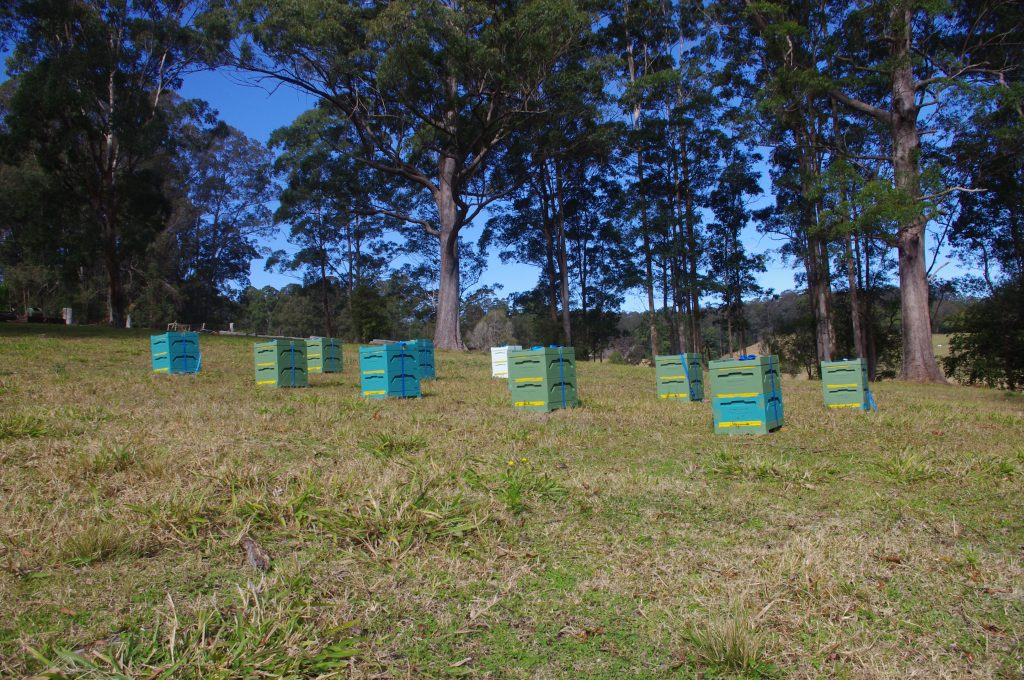 Learn beekeeping on our working hives