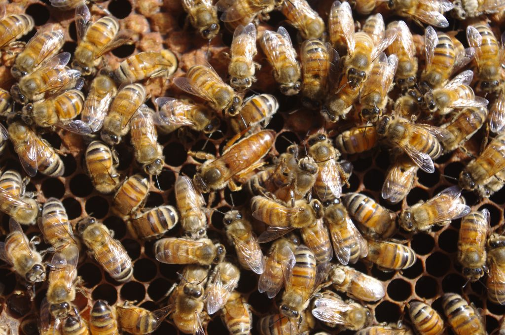 Queen bee breeding workshop