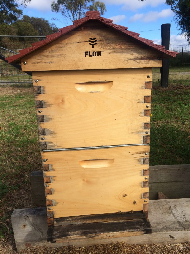 flow hive with queen excluder