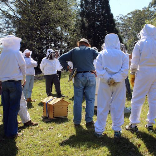online beekeeping resources