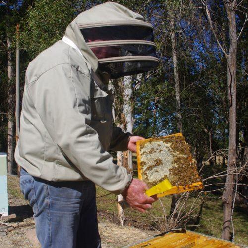 beekeeper troubleshooting