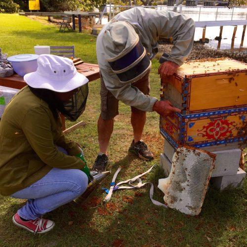flow hive mentoring