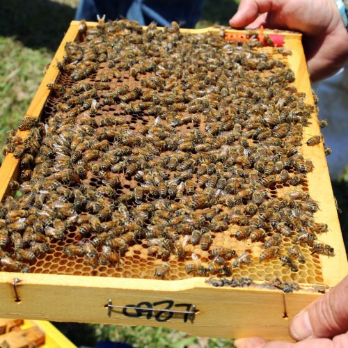 Spring hive management