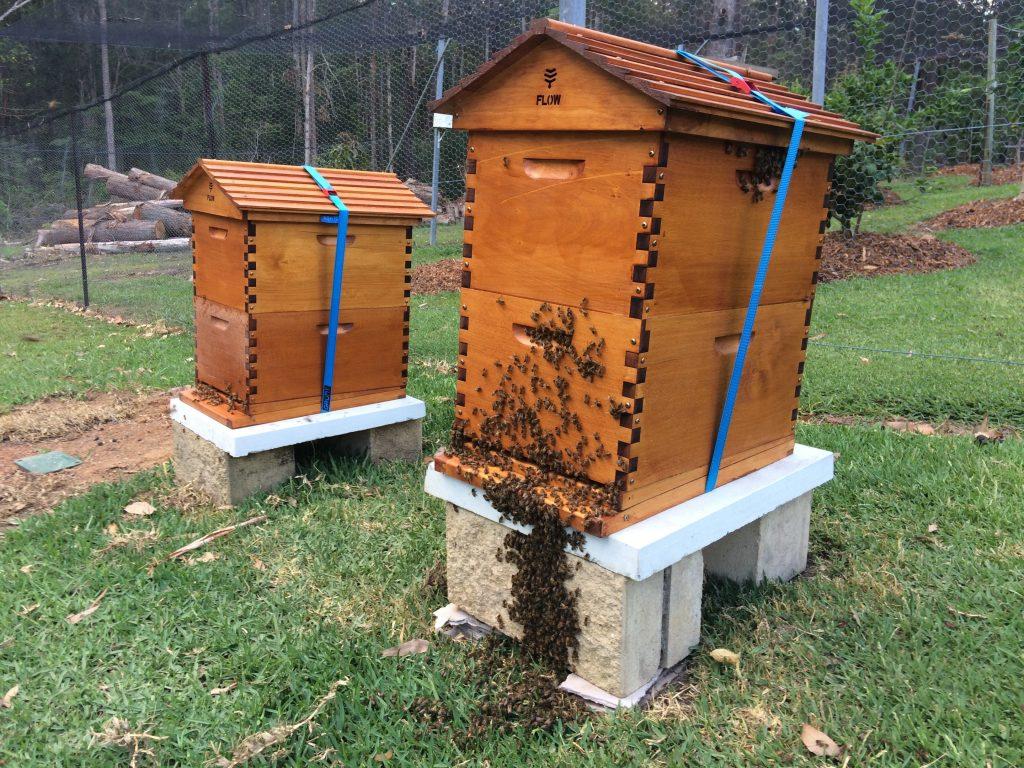 Backyard Beekeeping for Aussies | The Ultimate Beeginner's ...