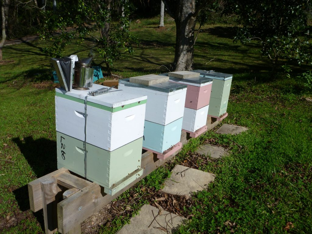 Backyard Beekeeping 101 For Urban Aussie Beekeepers Wiring Board Well Maintained Beehives