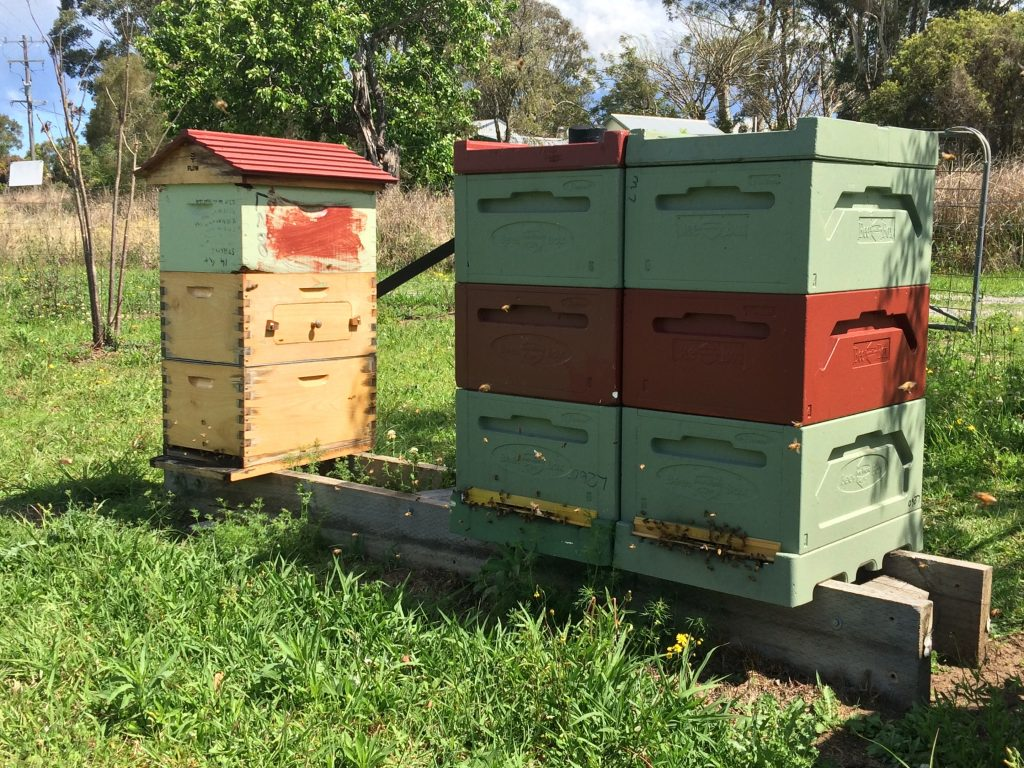 Beehives on a stand