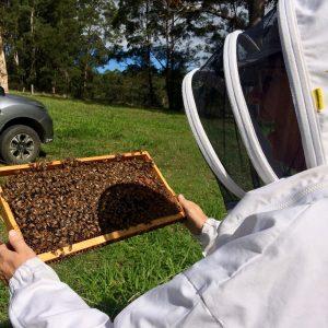 Beekeeping courses & workshops for beginners
